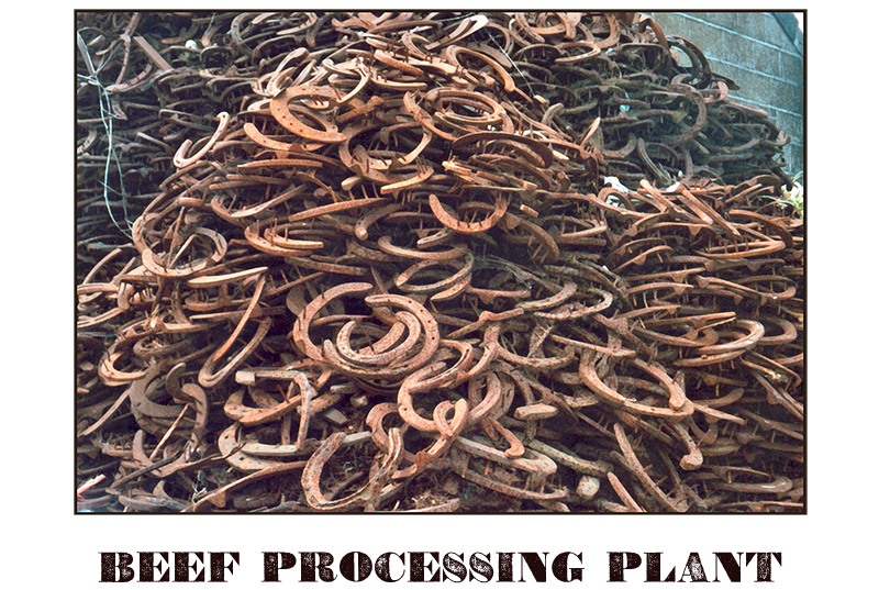 Photograph of a large pile of discarded horse shoes.  Caption reads: Beef Processing Plant